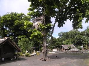 Kaimelis Tanna saloje