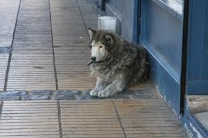 Valparaiso suva